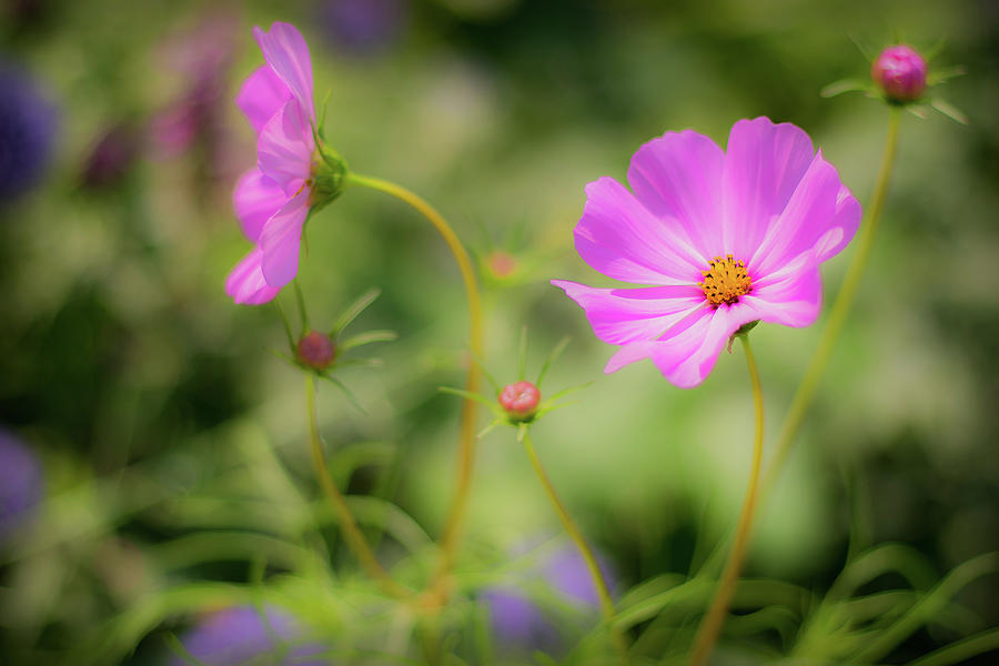 Pleasant Summer Wild Flowers by Will Bailey