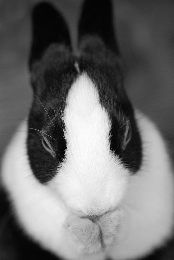 Rabbit Photograph - Please Be Carrots by Fraser Davidson