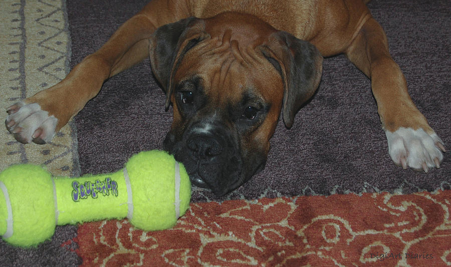Boxer Digital Art - Please Play With Me by DigiArt Diaries by Vicky B Fuller