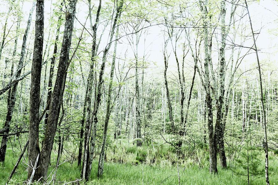 Woods Photograph - Pleasure Of Pathless Woods - Alt by Belinda Greb
