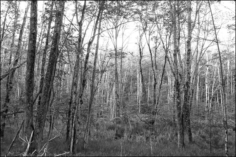 Woods Photograph - Pleasure Of Pathless Woods Bw by Belinda Greb