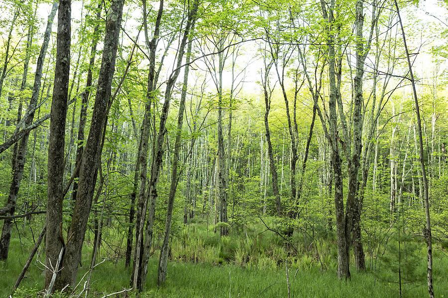 Woods Photograph - Pleasure Of Pathless Woods - Nat by Belinda Greb