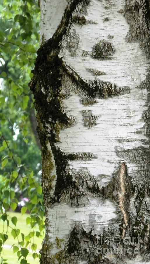 Patterns Photograph - Plentiful Patterns by L Cecka