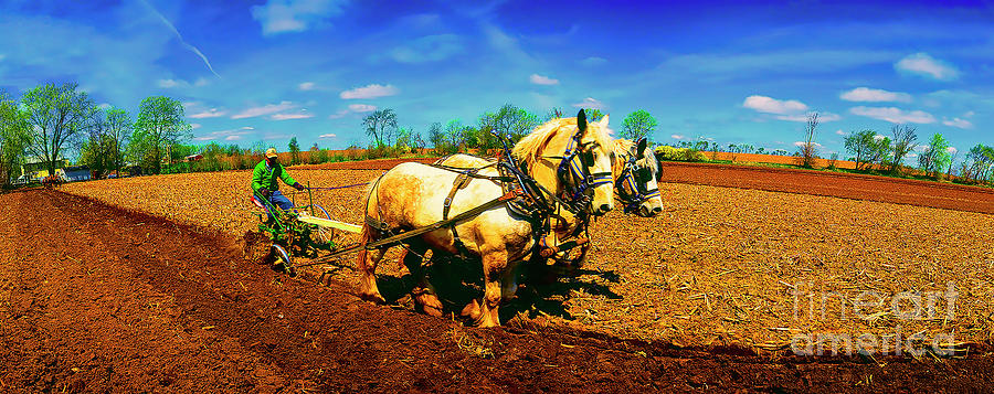 Plow days Freeport  Il Draft Horses  by Tom Jelen