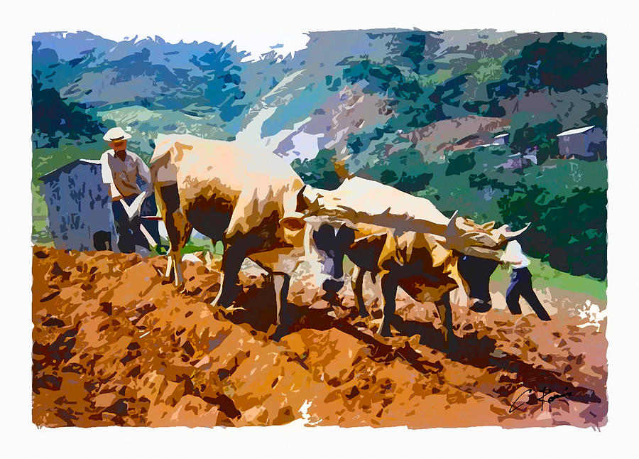 Plowing with oxen by Charlie Roman