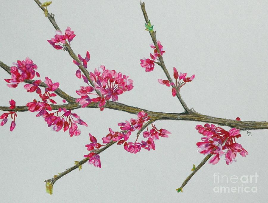 Color Drawing - Plum Blossom by Glenda Zuckerman