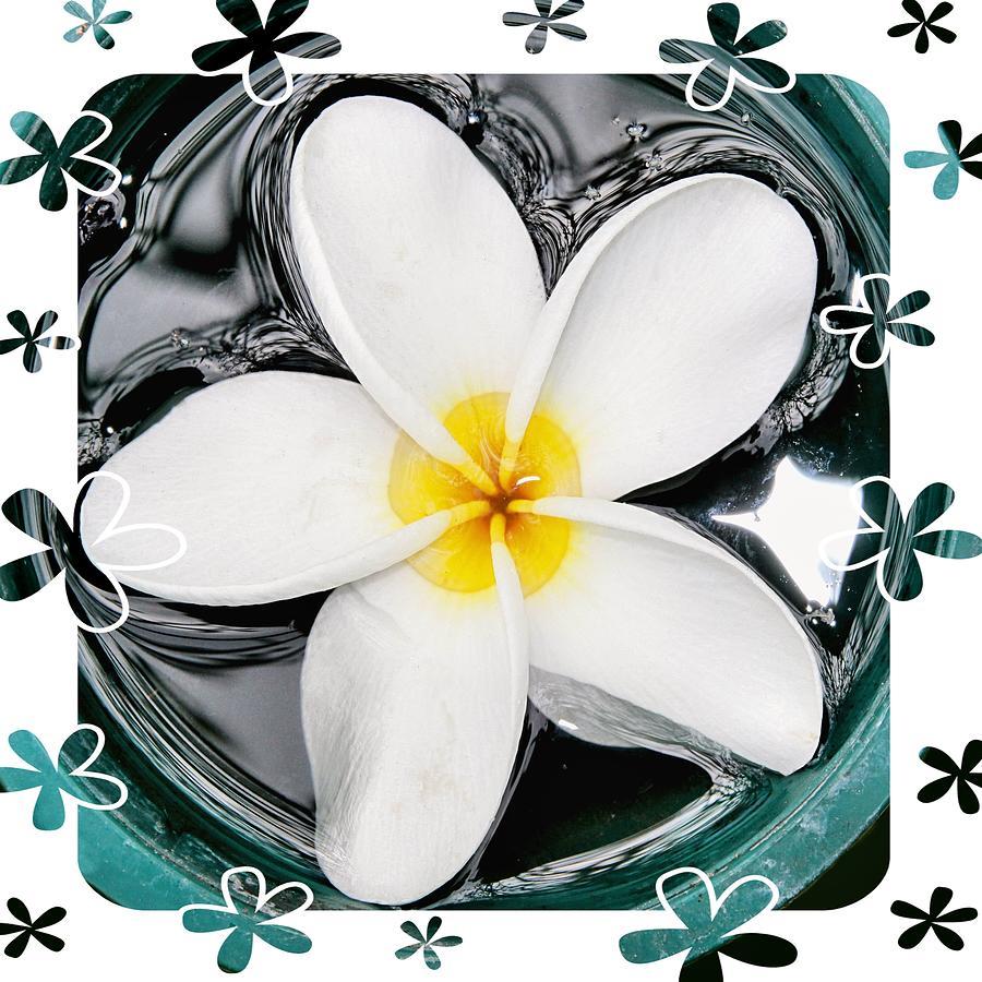 Flower Photograph - Plumeria In Water by DJ Florek
