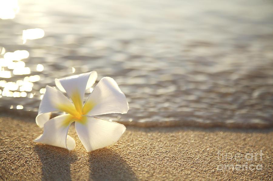 Plumeria On Beach Ii Photograph By Brandon Tabiolo