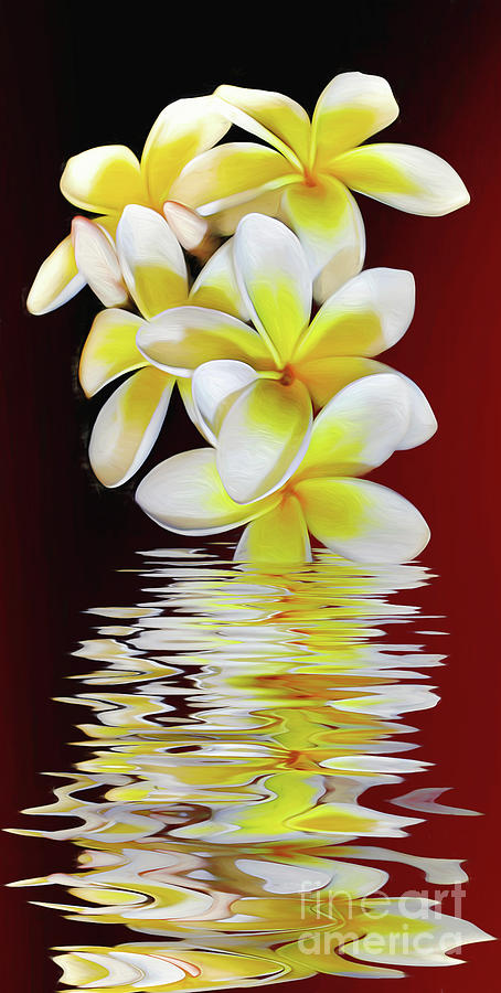 Plumeria Photograph - Plumeria Reflections By Kaye Menner by Kaye Menner
