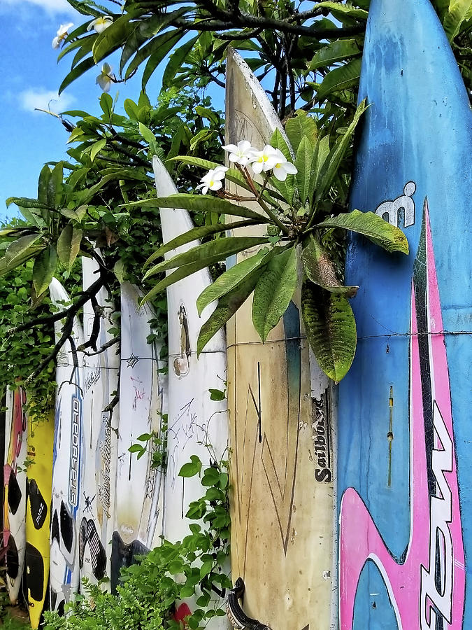 Plumeria Surf Boards by Michael Yeager