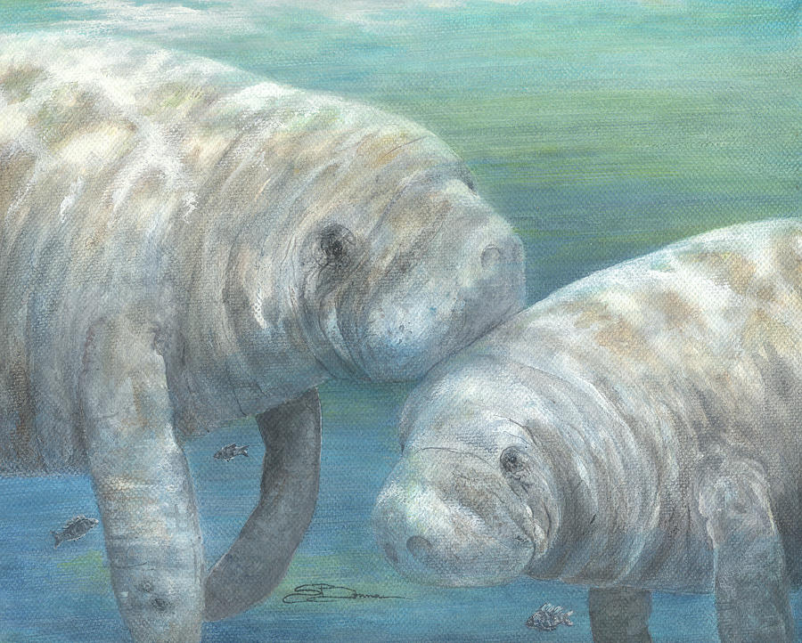 Manatee Painting - Plump And Placid by Sharon Bowman