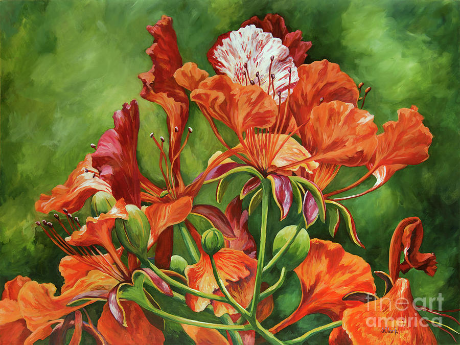 Red Tree Painting - Poinciana In Detail by John Clark