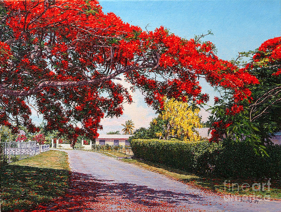 Poinciana Shadows by Eddie Minnis