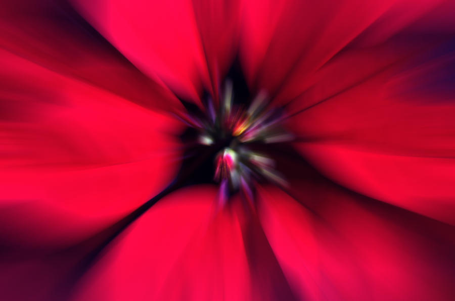 Poinsettia Photograph - Poinsettia Zoom by Steve Ohlsen