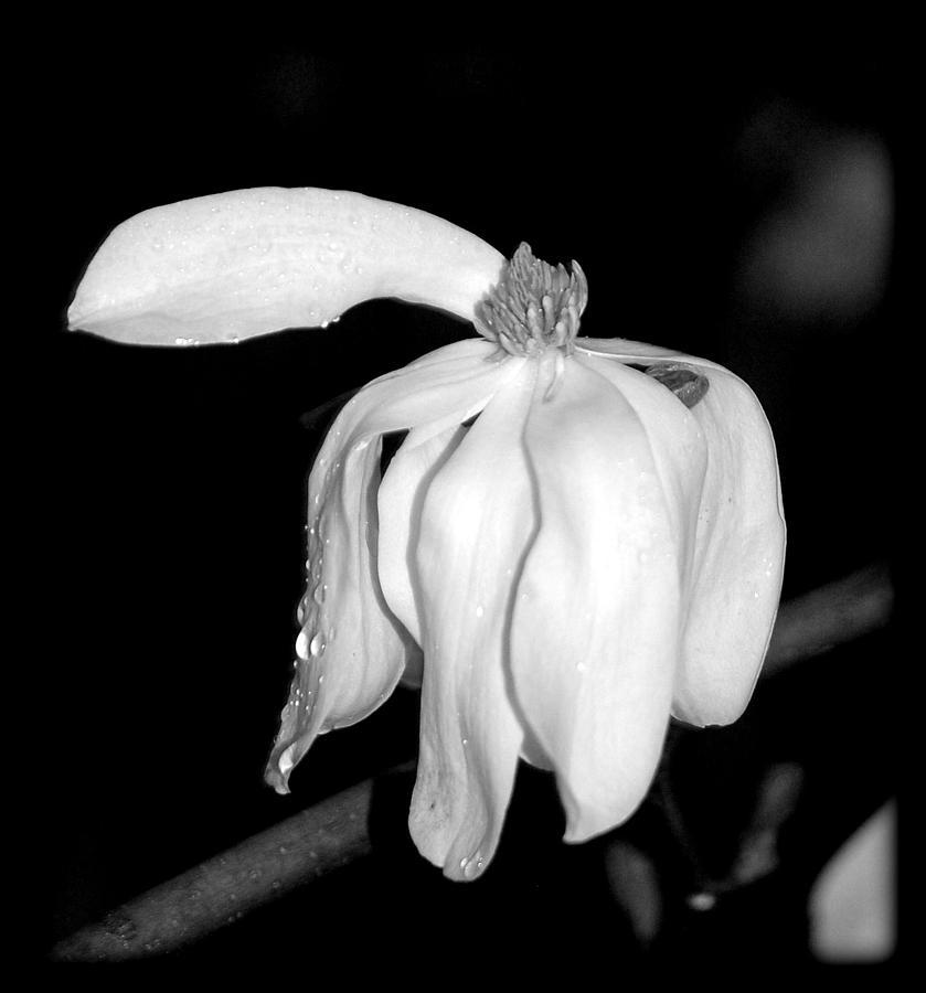 Black And White Photograph - Point by Sarah Hamlin