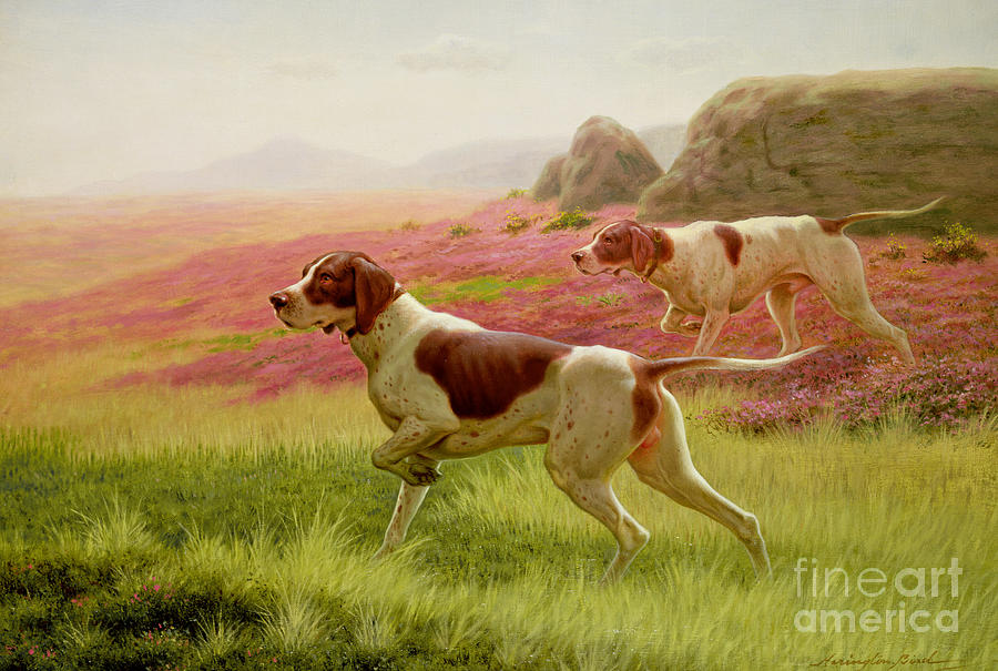 Hunting Painting - Pointers In A Landscape by Harrington Bird