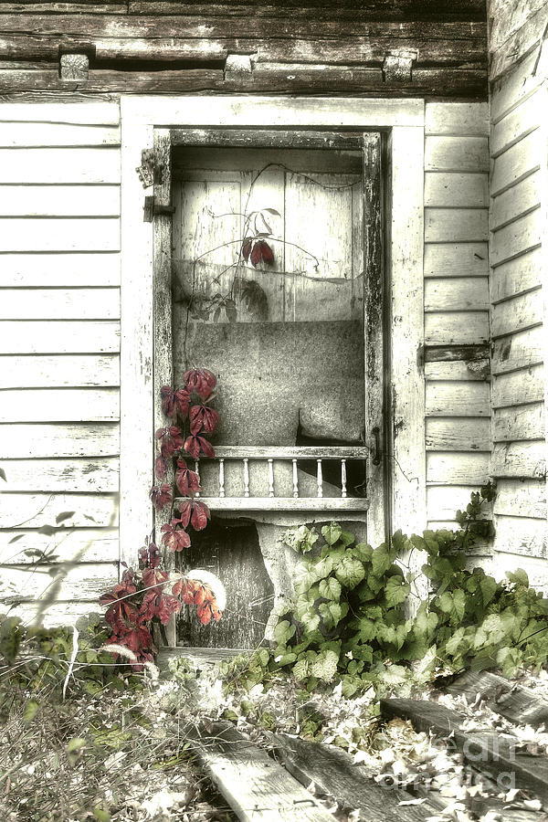 Old Photograph - Poison Ivy by Sari Sauls