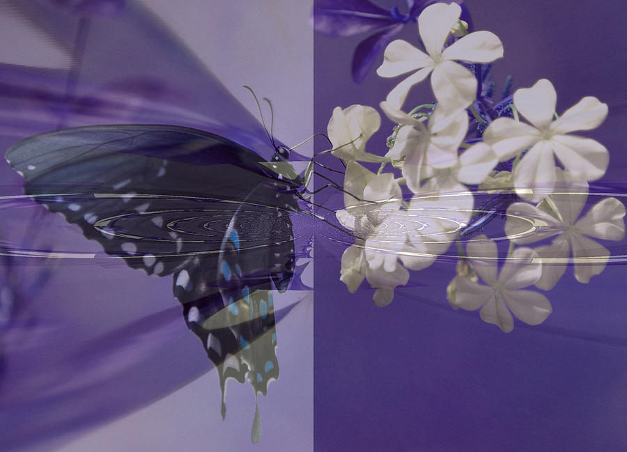 Butterfly Digital Art - Polar Attraction by Rose  Hill