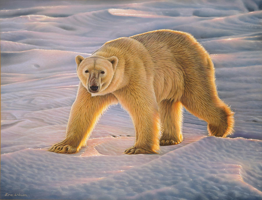 Polar Bear Painting - Polar Bear At Sunset - Wapusk National Park. by Eric Wilson
