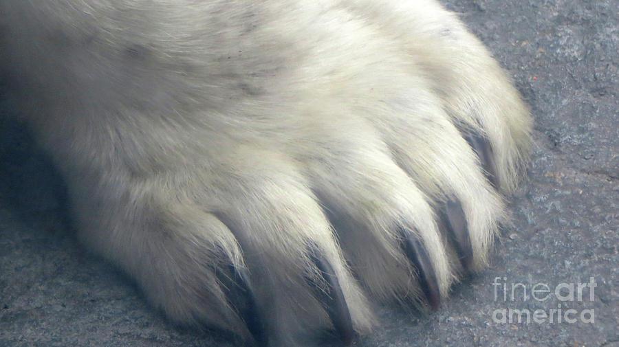 Polar Bear Claw Photograph By Mary Mikawoz