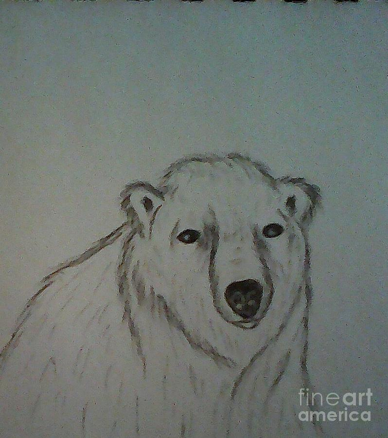 Bear Drawing - Polar Bear by Ginny Youngblood