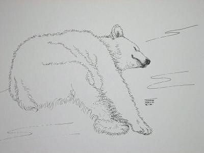 Print Drawing - Polar Bear by Joanie Arvin