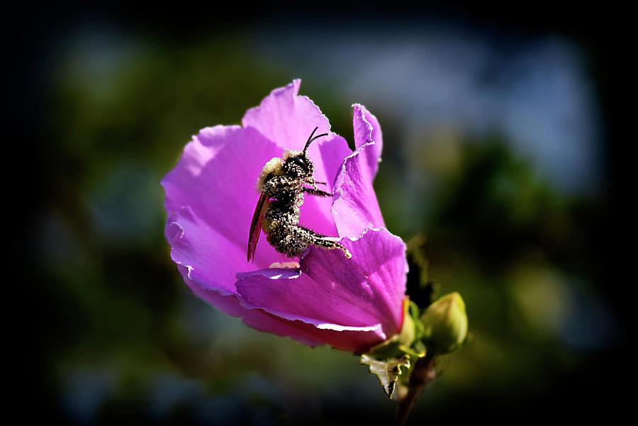 Pollen Clad by Patricia Montgomery
