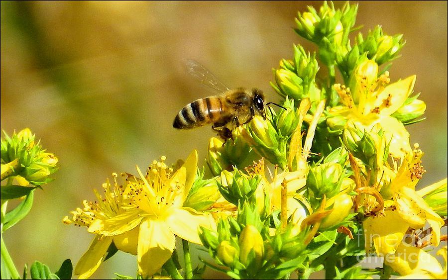 Pollen Collector by Julia Hassett