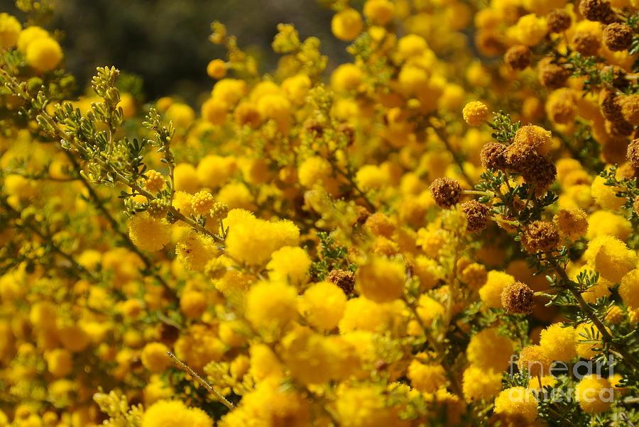 Flowers Photograph - Pollen by Oscar Moreno