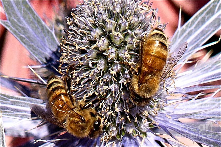 Pollen Pals by Julia Hassett