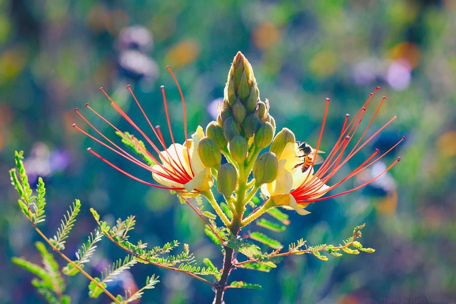 Pollination Photograph