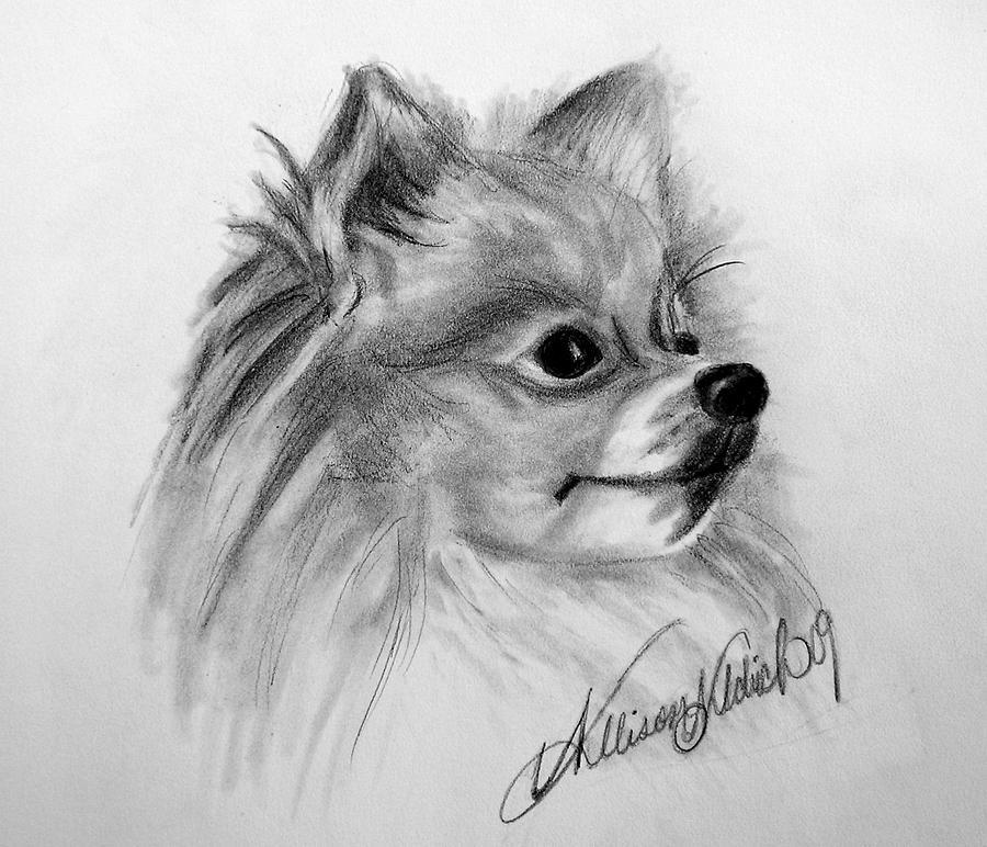 pomeranian dog drawing pomeranian by allison aldrich pomeranian allison aldrich