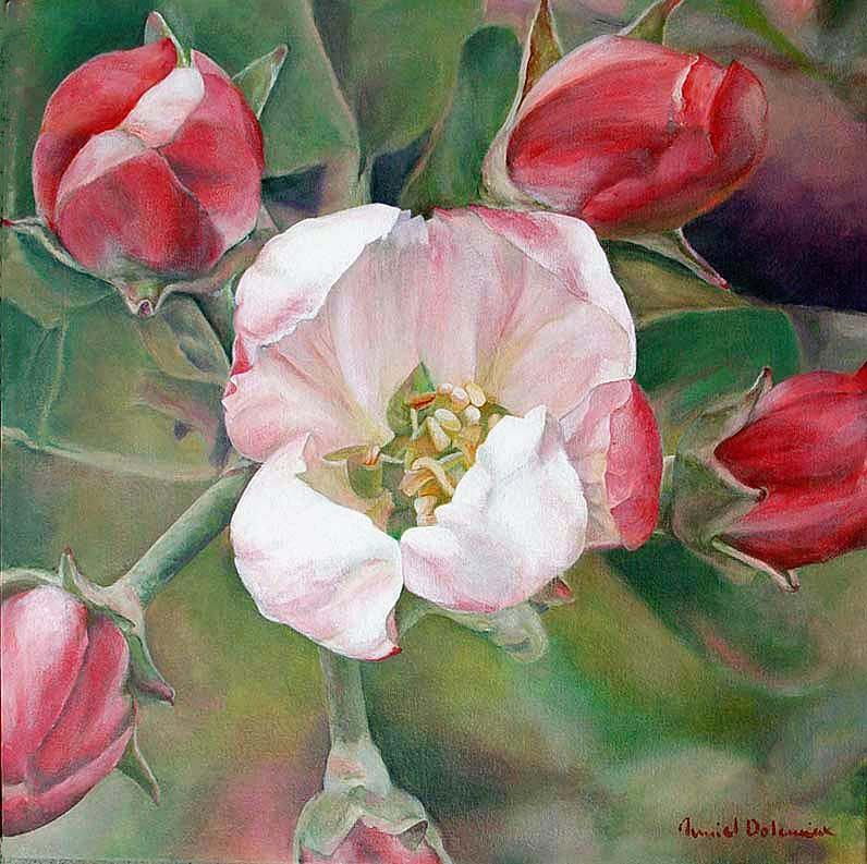 Flower Painting - Pommier by Muriel Dolemieux
