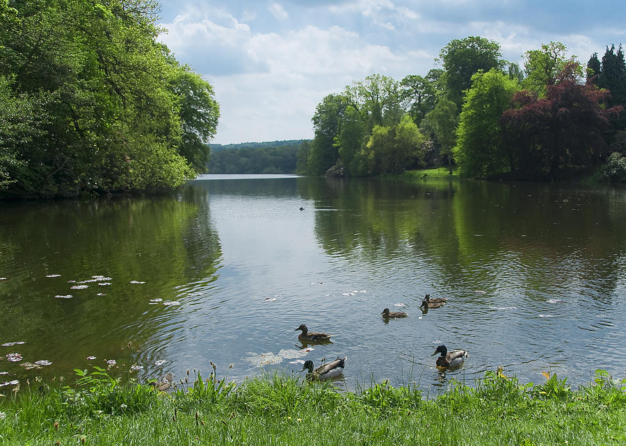 Countryside Photograph - Pond And Ducks by Svetlana Sewell