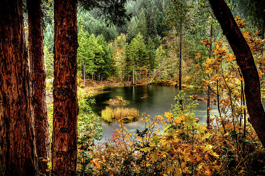 Pond at Golden Or. by Jim Adams