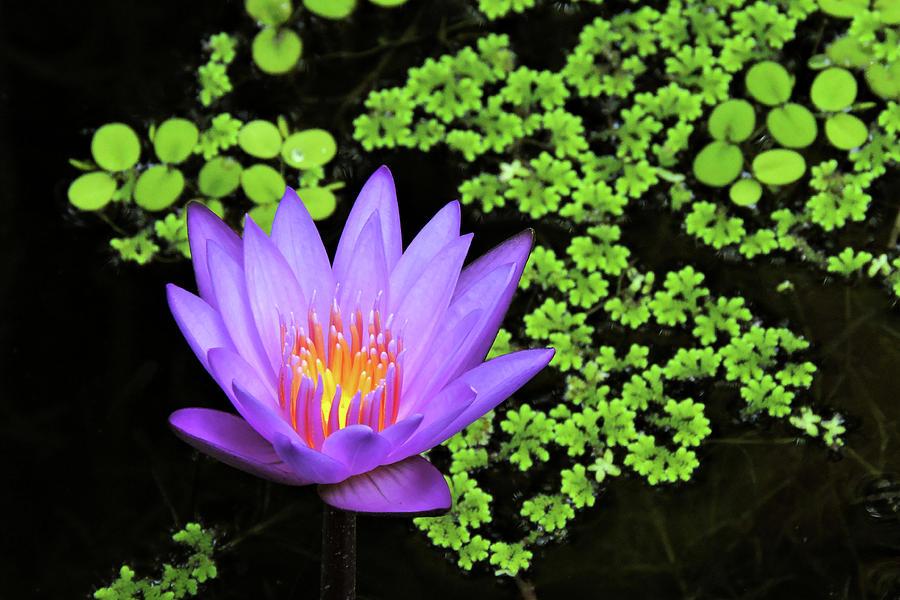 Pond Beauty Photograph