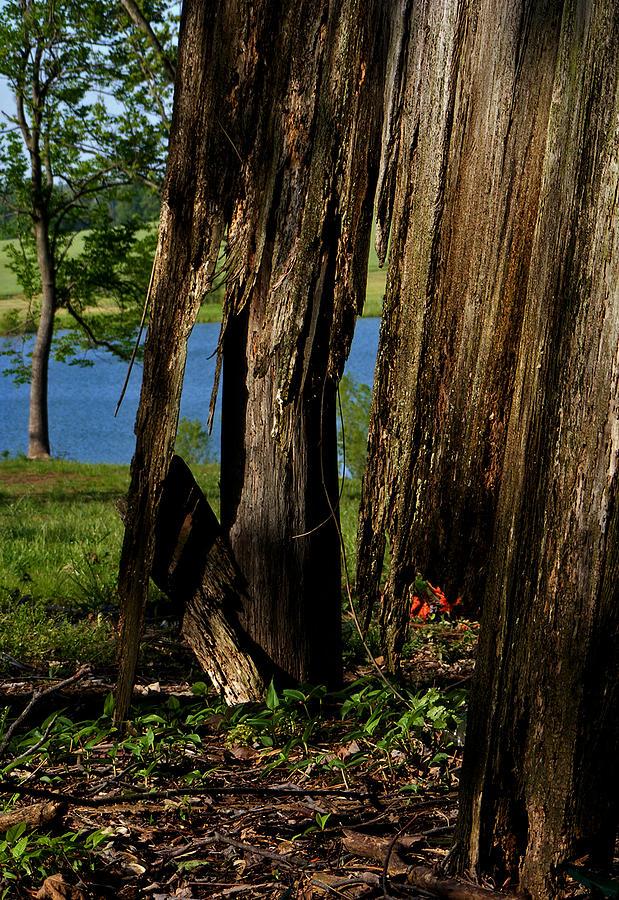 Landscape Photograph - Pond Fragments by Rachel Christine Nowicki