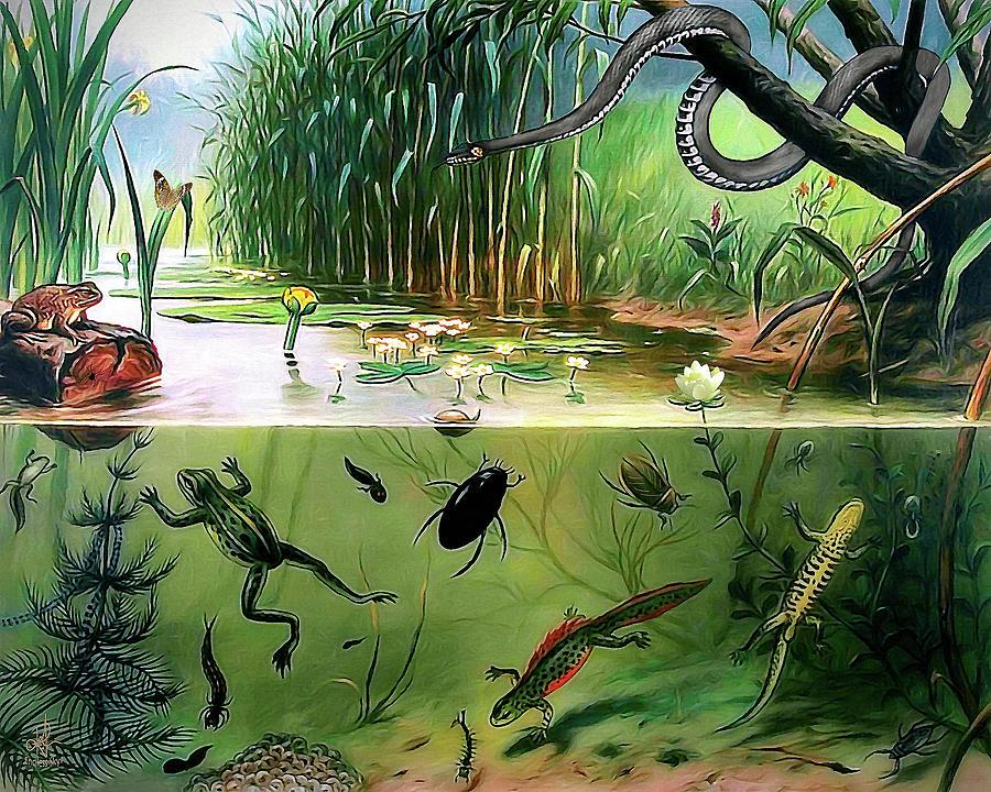 Pond Life by Pennie McCracken