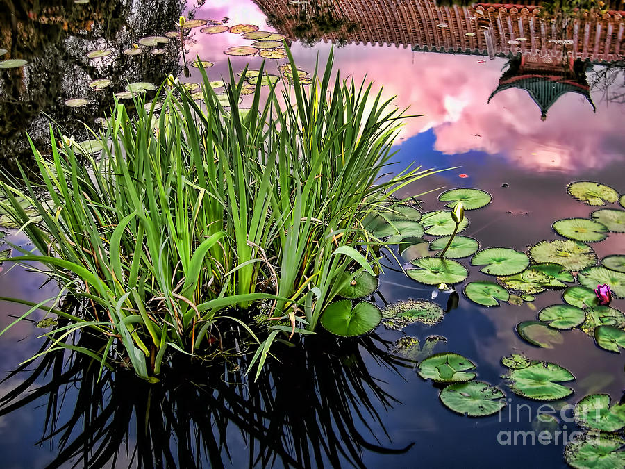 Pond Photograph - Pond by Nora Martinez