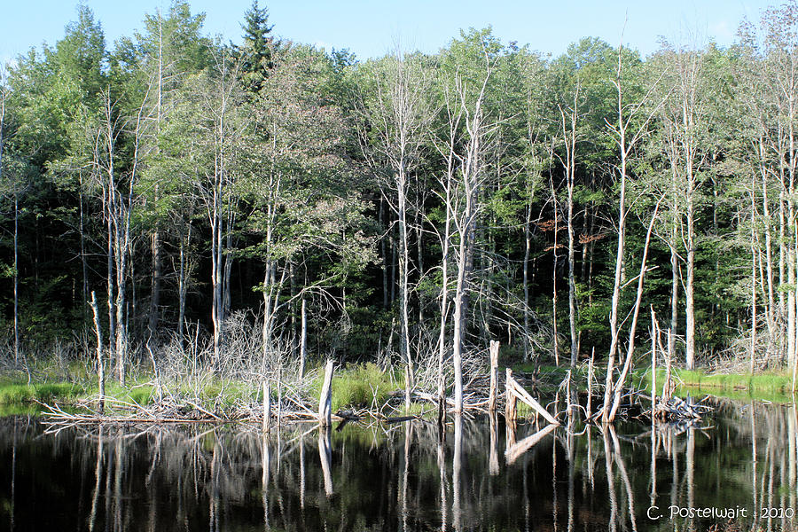Ponds Photograph - Pond on Route 39 by Carolyn Postelwait