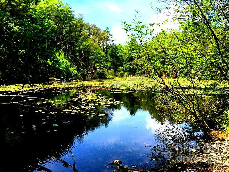 Pond On The Delaware Gap Photograph by William Rogers