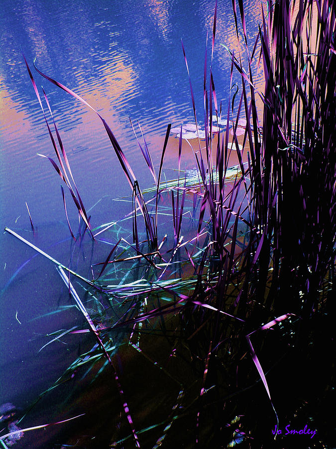 Reeds In Pond At Sunset Photograph - Pond Reeds At Sunset by Joanne Smoley