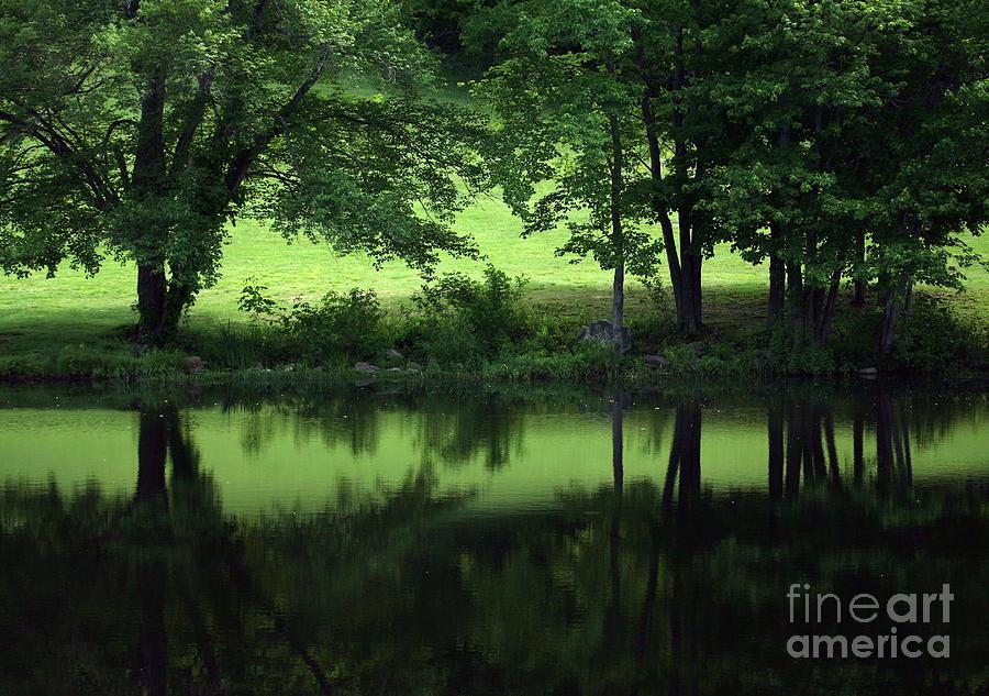 Summer Photograph - Pond Reflect by Karol Livote