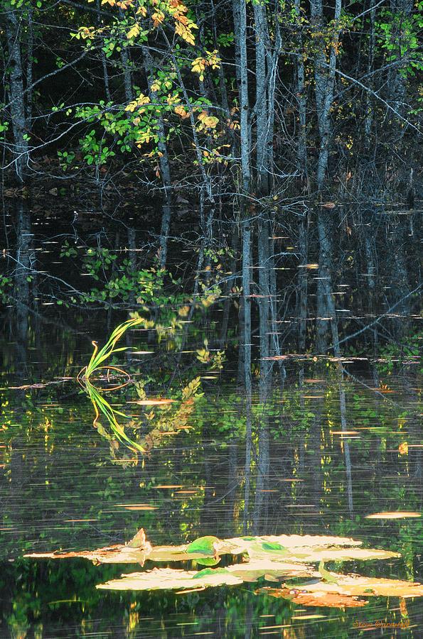 Washington Photograph - Pond Reflections by Steve Warnstaff