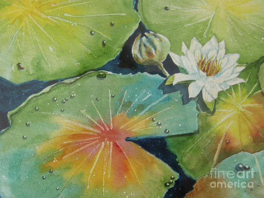 Pond Water Lily by Midge Pippel