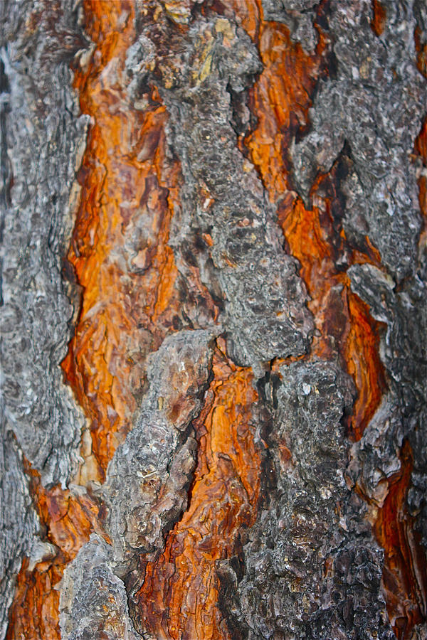 Ponderosa Pine Bark by Jon Reddin