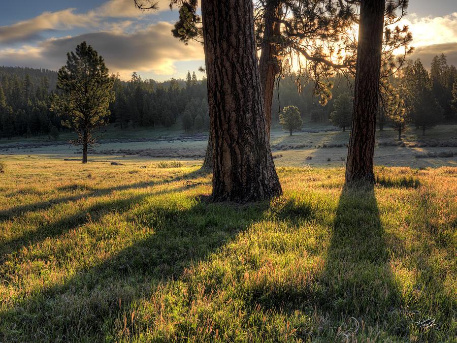 Beautiful Photograph - Ponderosa Pine Meadow by Leland D Howard