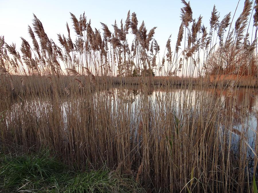 Landscape Photograph - Pondside Tranquility by Bill Helman