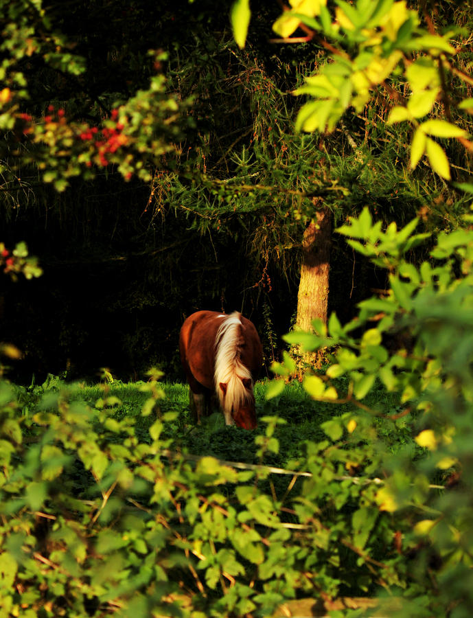 Pony in Sun-Dappled Meadow by Sarah Broadmeadow-Thomas