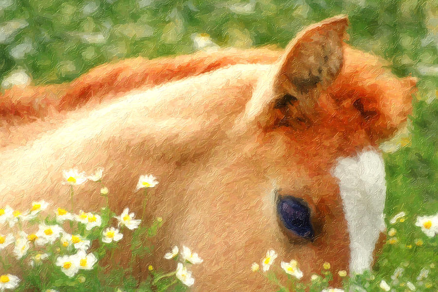 Horse Photograph - Pony in the Poppies by Tom Mc Nemar